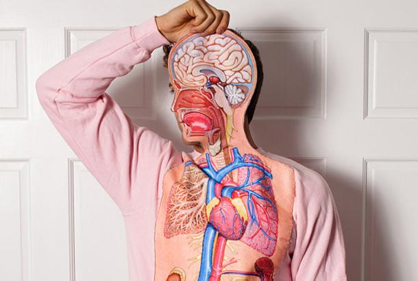 内臓 観察