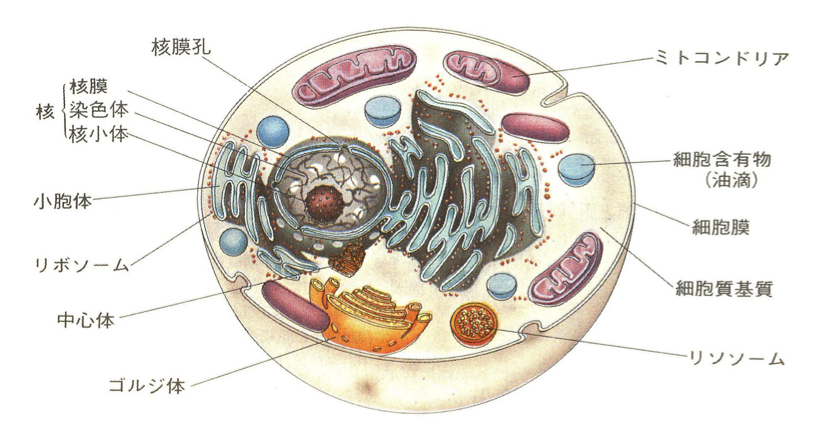 cell-structure.png
