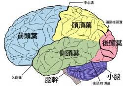 中心溝 外側溝