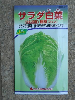 160730 白菜①