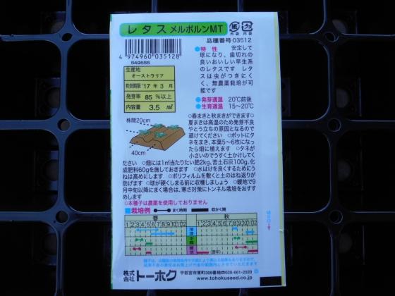 160808 レタス②