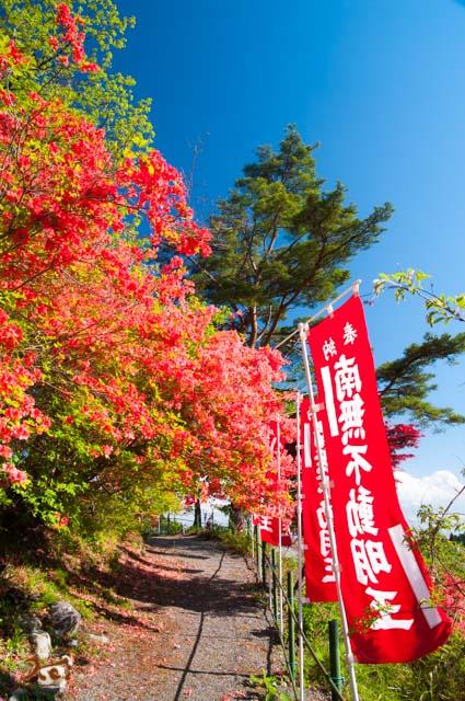 20160504龍願寺ぼたん祭り前半12