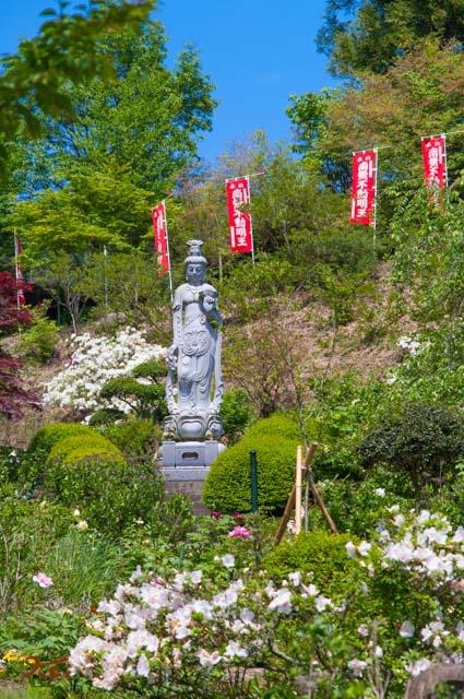 20160515龍願寺ぼたん祭り02