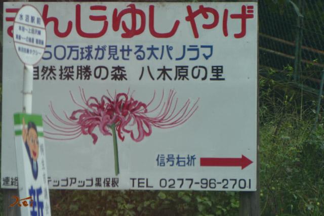 20160917彼岸花_水沼八木原の里01