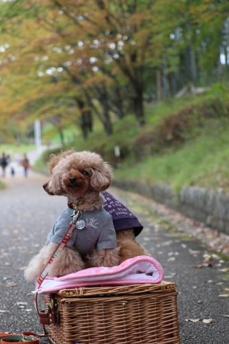 IMG_143320181104山田池公園2