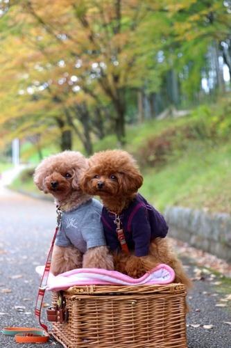 IMG_144020181104山田池公園3