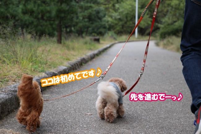 IMG_144220181104山田池公園4