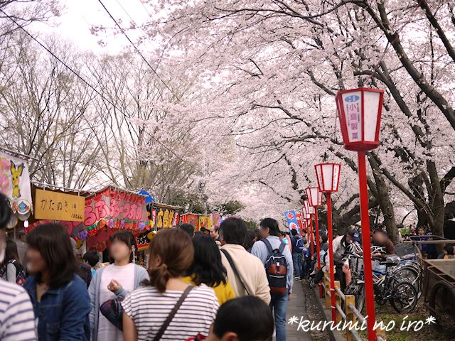 160403sakura01.jpg