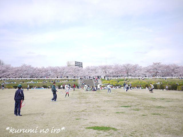 160403sakura02.jpg