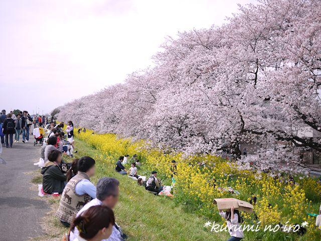 160403sakura03.jpg