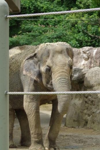 福岡市動物園の象さん