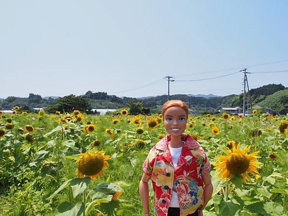 himawari-20160718-02s.jpg