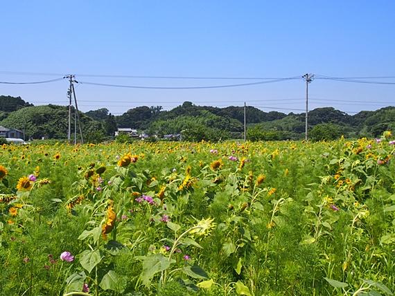 himawari-20160718-10s.jpg