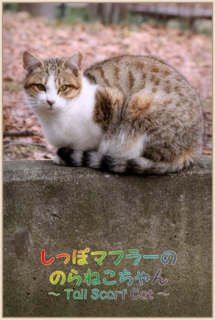 猫写真 野良猫 ねこマフラー