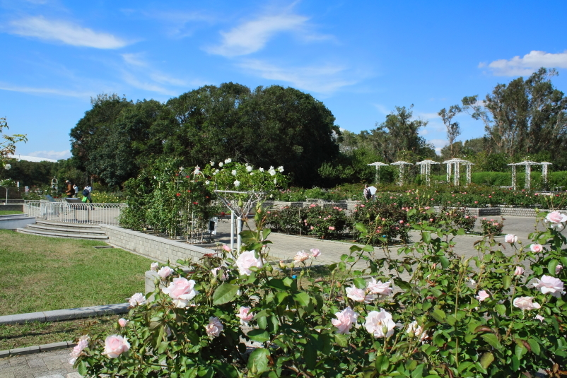 Autumn Rose Week 2018