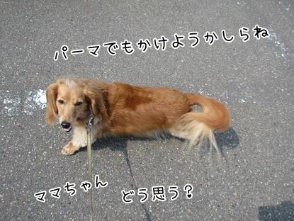 kinako5539.jpg
