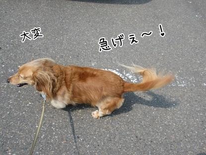 kinako5540.jpg