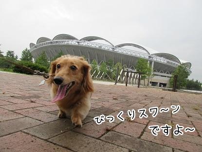 kinako5566.jpg