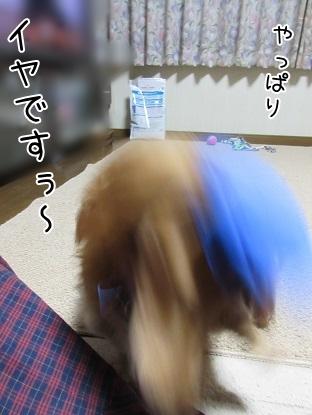 kinako5581.jpg
