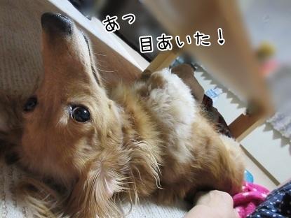 kinako5626.jpg