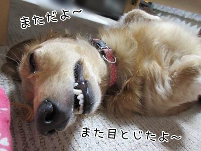 kinako5627.jpg