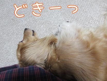 kinako5631.jpg