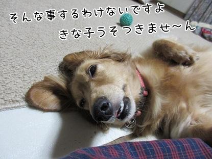 kinako5634.jpg