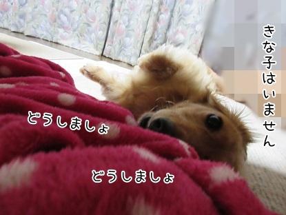 kinako5671.jpg
