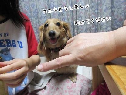 kinako5673.jpg