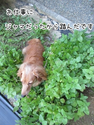 kinako5686.jpg