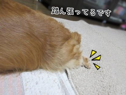 kinako5697.jpg