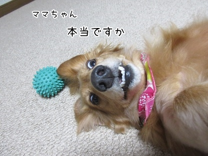 kinako5789.jpg
