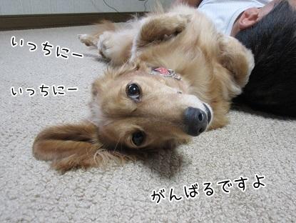 kinako5813.jpg