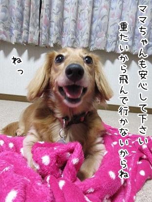 kinako5884.jpg