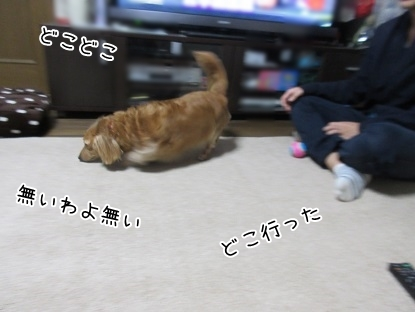 kinako5902.jpg