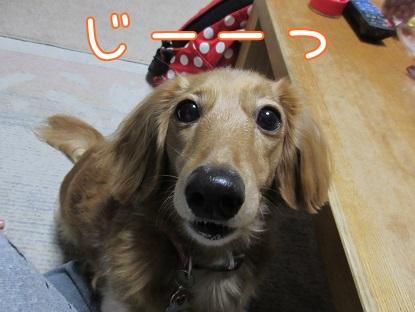 kinako5948.jpg