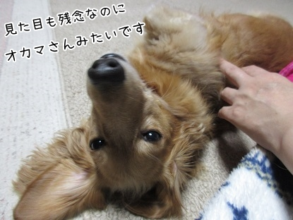 kinako5987.jpg