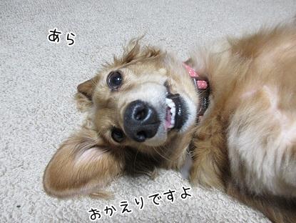 kinako5989.jpg