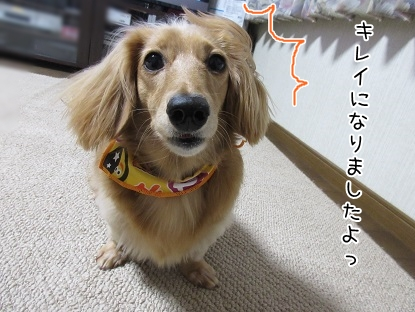 kinako5998.jpg