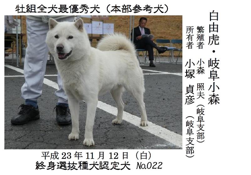 20181104-02-道犬牝最優秀犬白由虎