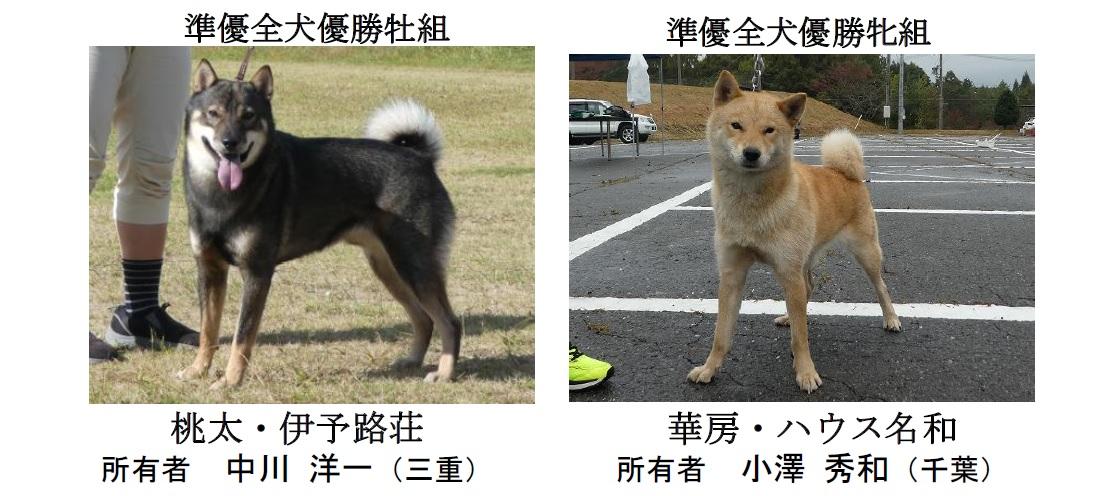 20181104-04-道犬準優全犬優勝