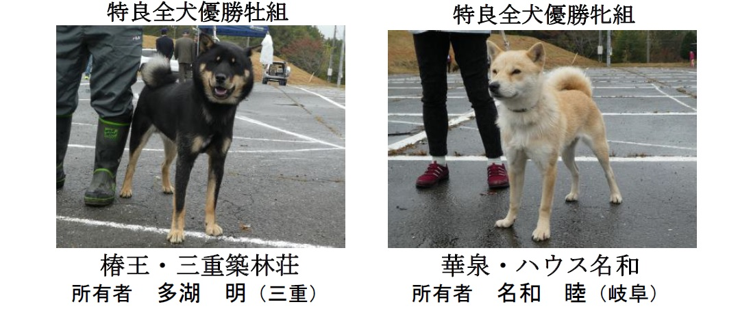 20181104-05-道犬特良全犬優勝