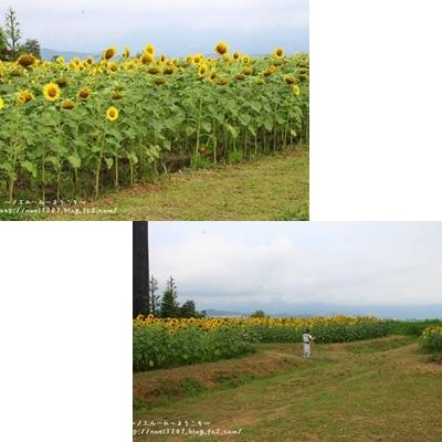 himawari0729.jpg