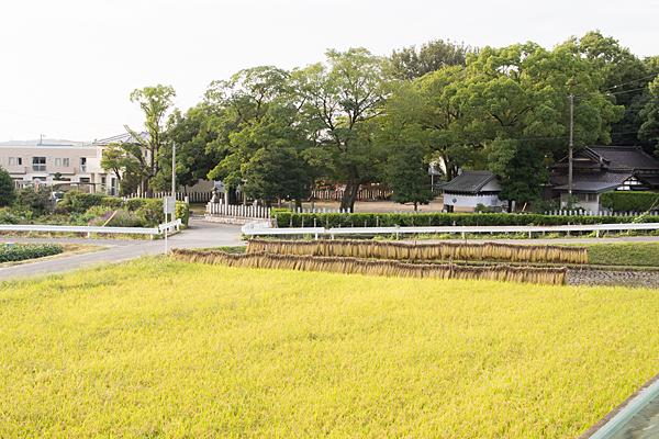 稲刈りどきの一之御前神社全景