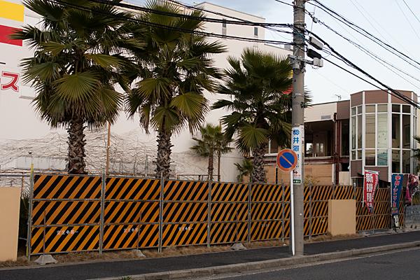 閉店と椰子の木