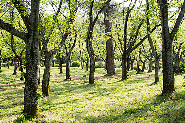 平和公園の新緑