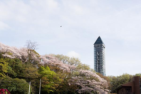東山スカイタワーと桜