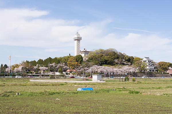 城山公園桜