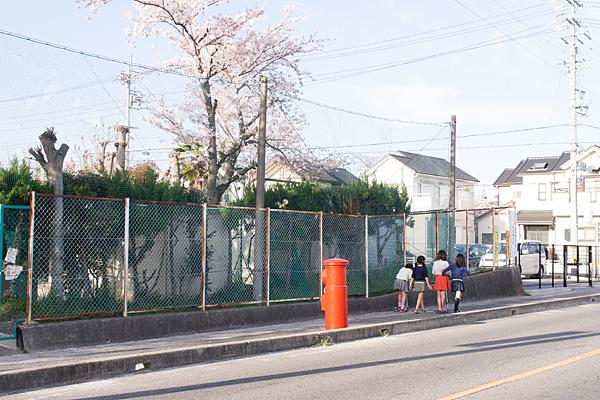 丸ポストと小学校の桜