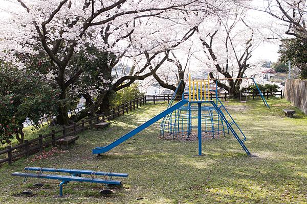 陶祖公園の遊具と桜